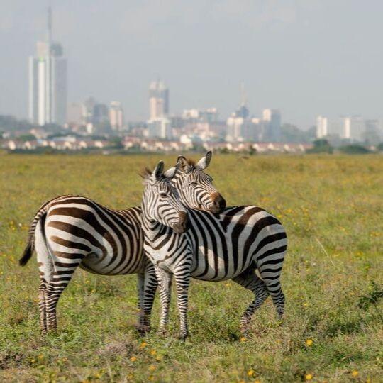 safari a kenia