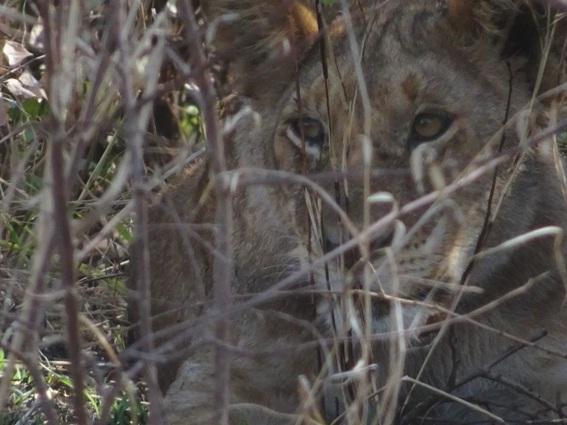 safari-barato