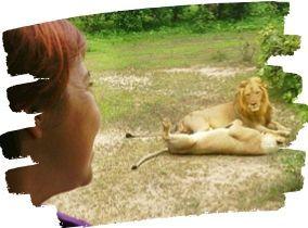 safari-a-kenia-precios